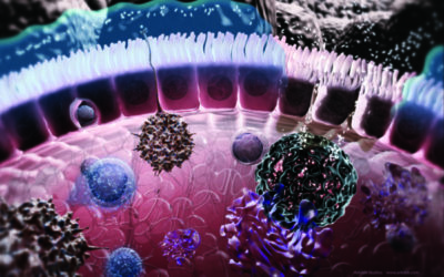 How Vaccines and the Immune System Work