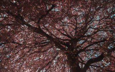 "Sermon: ""Very Good"" by Greg Cootsona"