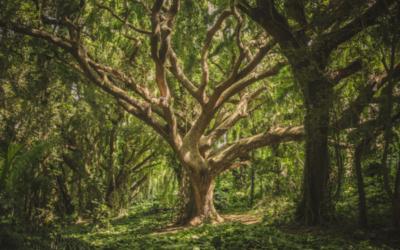 Becoming Like Trees
