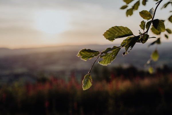 Understanding the Creation Narrative